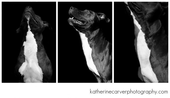 Black and white © Katherine Carver