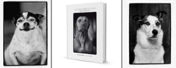 Compawssion Portraits Of Rescued Dogs �© Frank Bruynbroek