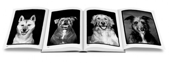 Book - Compawssion Portraits Of Rescued Dogs �© Frank Bruynbroek