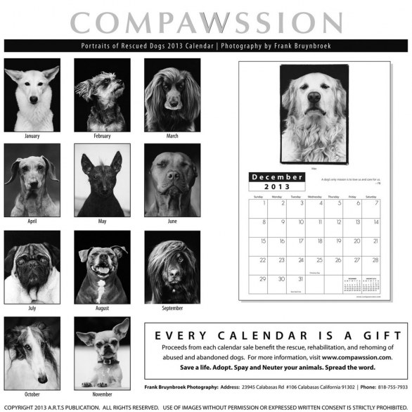 Calendar - Compawssion Portraits Of Rescued Dogs �© Frank Bruynbroek