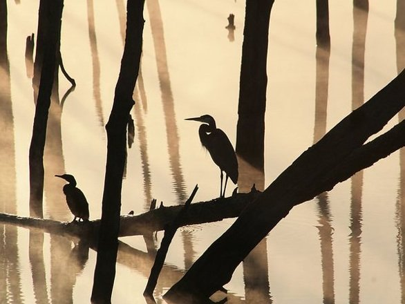 fog-birds-tree_17801_National_Geographic_Photo_of_the_Day-Best-of_April_2010
