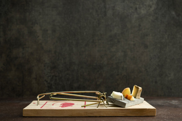 Gourmet Mouse Traps, CheeseBoard © Davide Luciano & Claudia Ficca