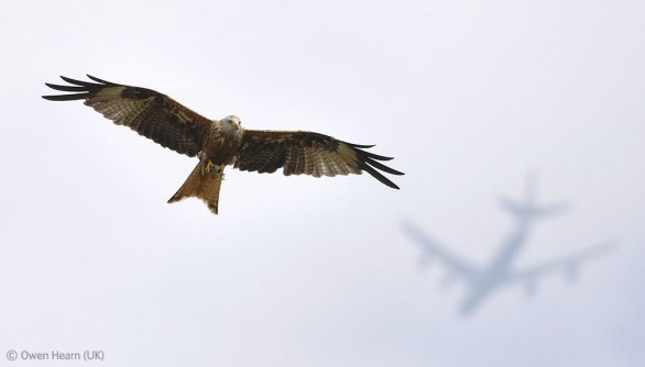 Owen Hearn, UK Flight paths - Veolia Environnement Wildlife 2012