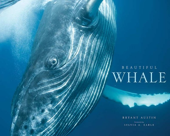 Beautiful Whale  © Bryant Austin/Studio  Cosmos - cover book