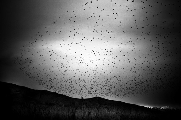 A flock of birds flies over the coast of Lake Van in eastern Turkey where the largest population of Turkey's Armenians had been living for centuries