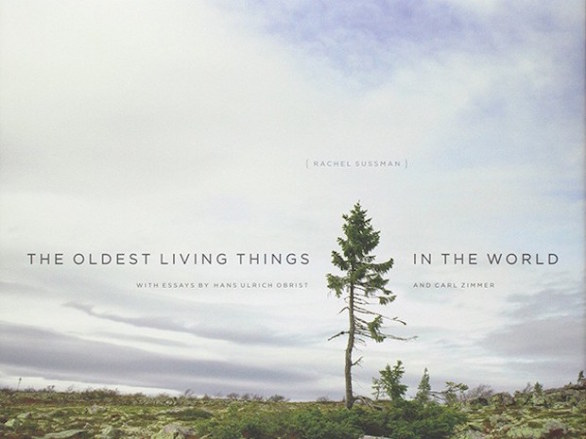 The Oldest Living Things in the World – Rachel Sussman