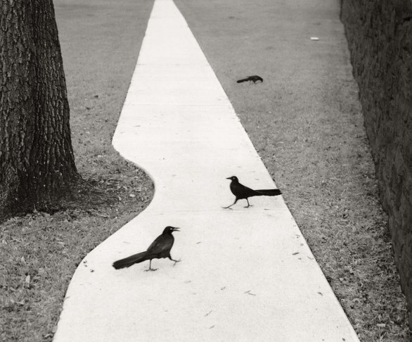 Qui Far Away - Houston, Texas, USA, 1998, Nailya Alexander © Pentti Sammallahti, Courtesy of Nailya Alexander Gallery, New York