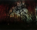 Sonja Braas_The quiet of dissolution_Forest Fire
