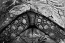 The Centre Cannot Hold - tortoise © David Gulden