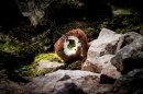 The Mammal Society, Play-fighting Stoats by Joel Walley