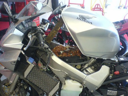 Topi nell'airbox